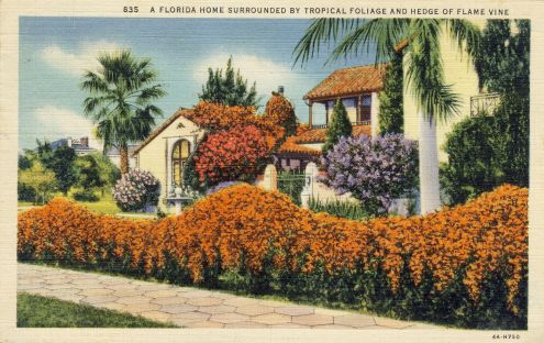 Postcard: Florida Home Surrounded by Tropical Foliage