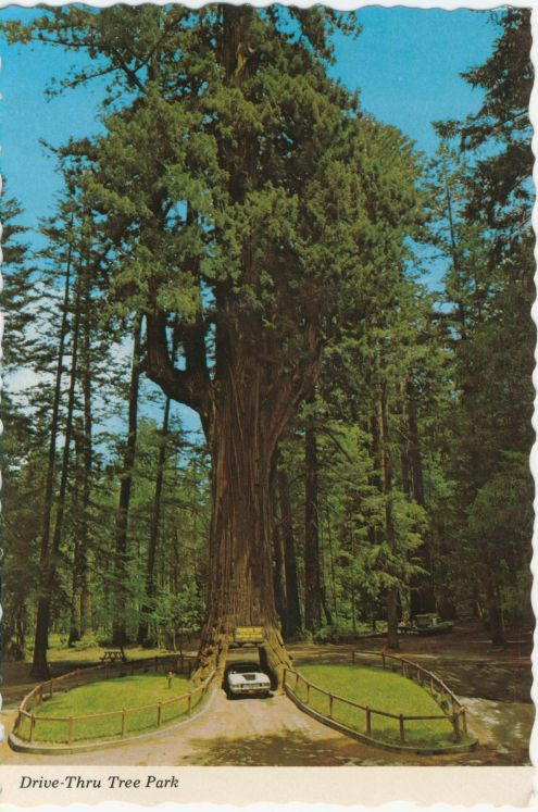 Postcard chandelier drive thru tree spitball army postcardredwood treedrive thru park102113resized aloadofball Choice Image